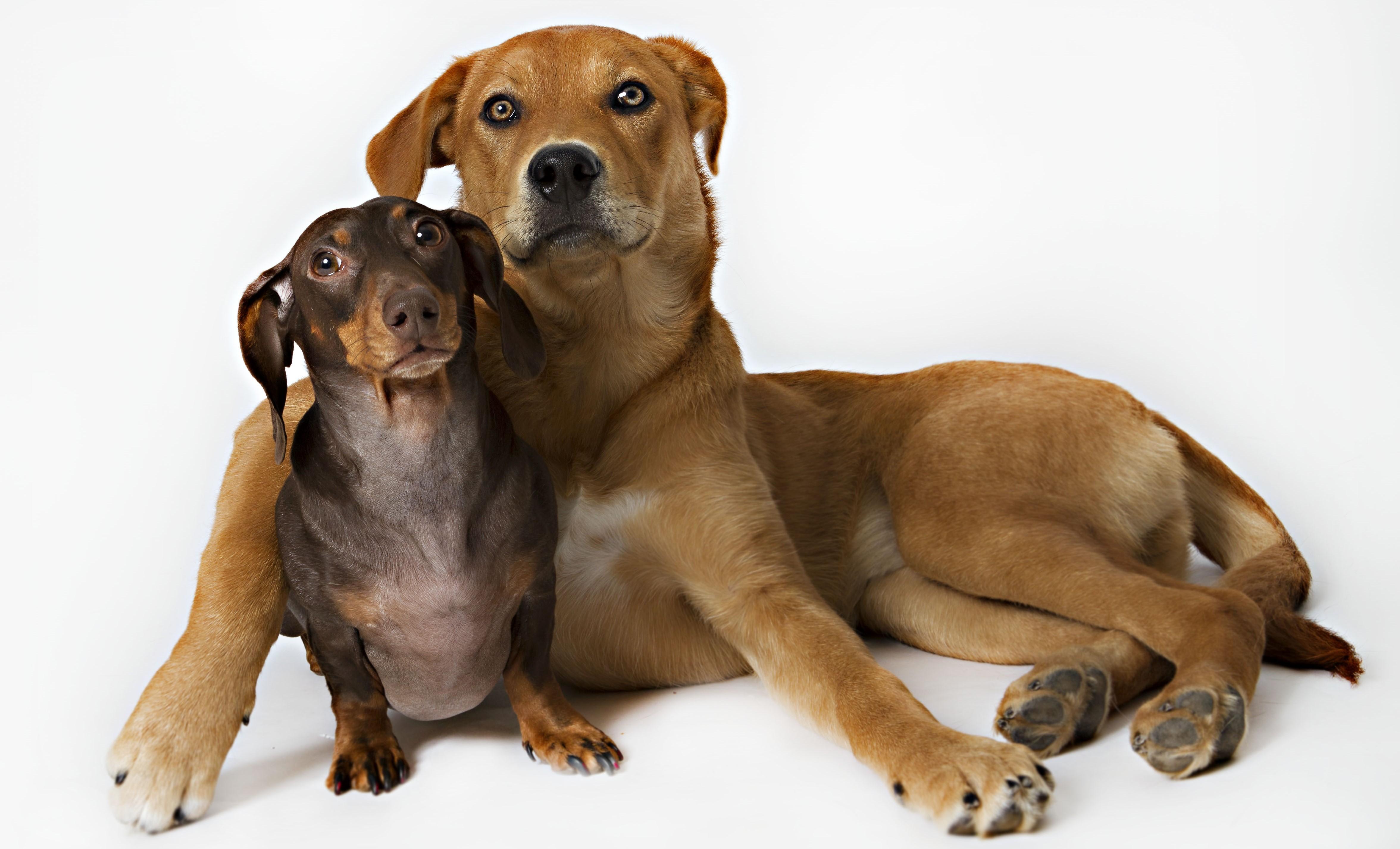 Quels sont les avantages de posséder un animal de compagnie?